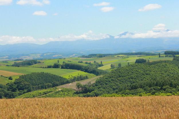パッチワークの路:五稜エリアの丘
