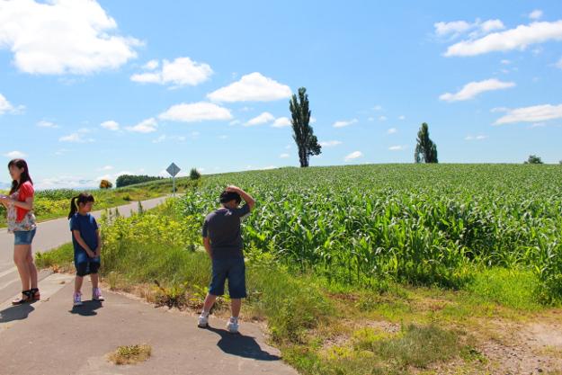 パッチワークの路:マイルドセブンの丘周辺の丘