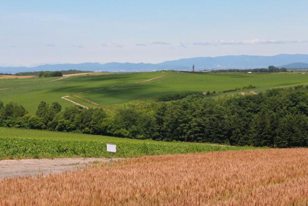 パッチワークの路:セブンスターの木周辺の丘