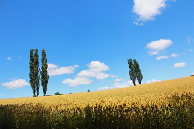 就実の丘周辺(旭川市境界付近)の丘