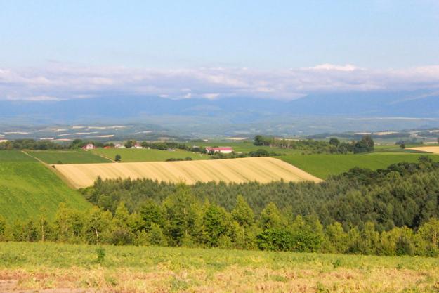 パフィーの木周辺(上富良野町境界付近)の丘