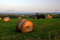 牧草地にロールベールサイレージ