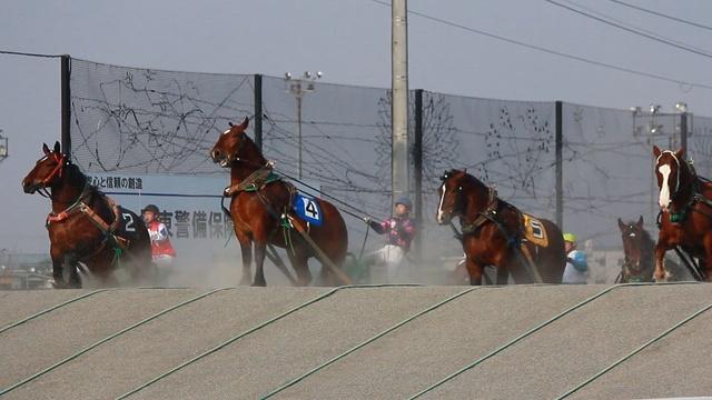 世界唯一!大迫力!帯広競馬場で開催される「ばんえい競馬」とは?