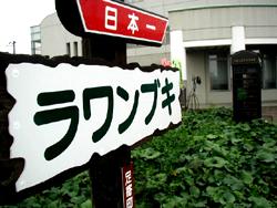 ラワンブキ、日本一の巨大フキ