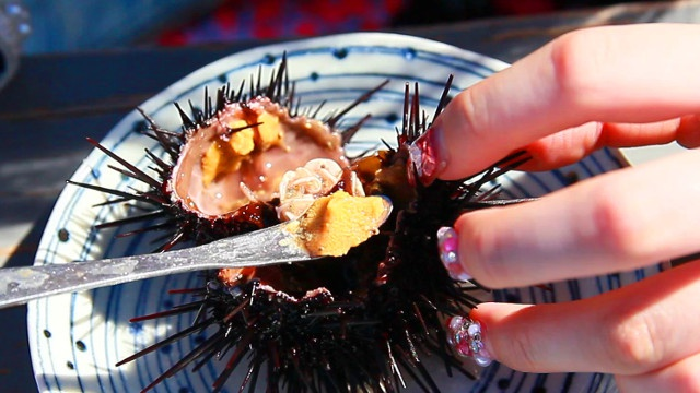 新鮮な殻付活ウニをその場で割って出してくれる!積丹の「うに小屋」
