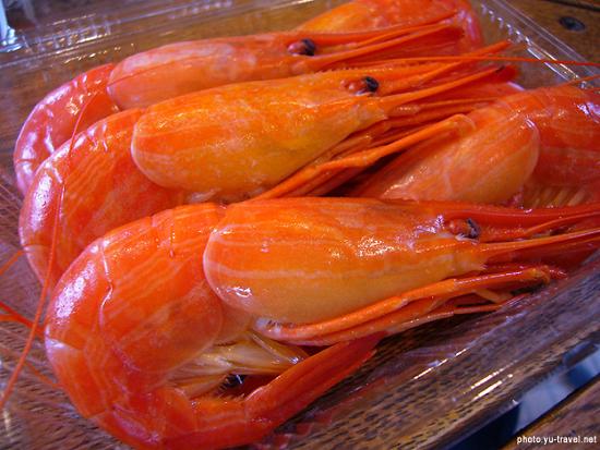 羽幌近海はなぜアマエビの産地なのか?武蔵堆との深い関係
