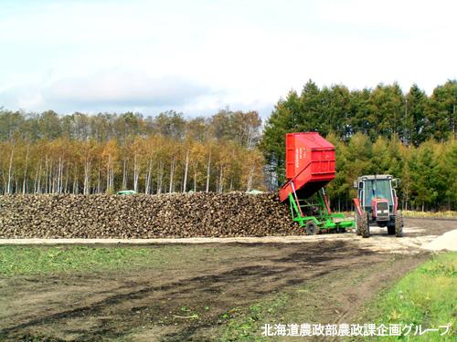 北海道が100%生産!甜菜(てんさい・ビート)とは?