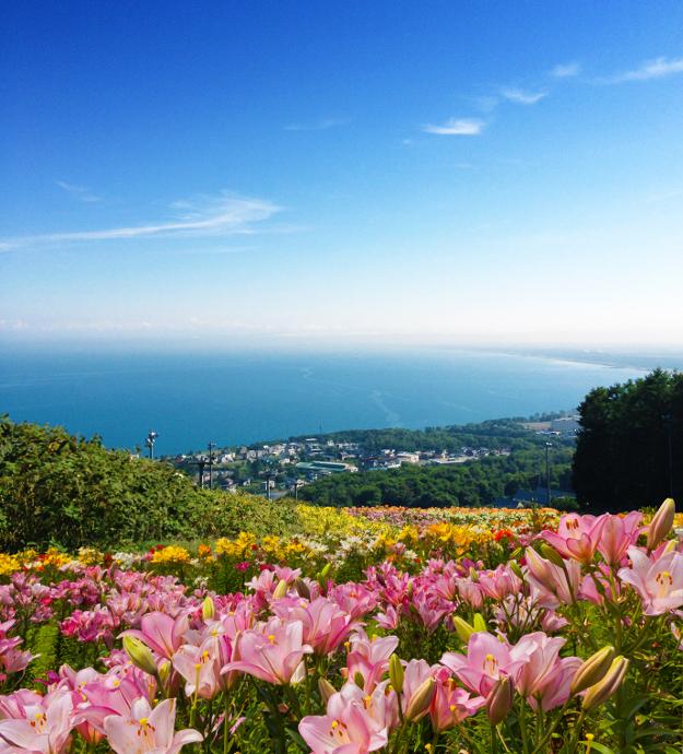 海とユリのコラボは絶景! 道内最大級「オーンズ春香山ゆり園」が小樽に誕生