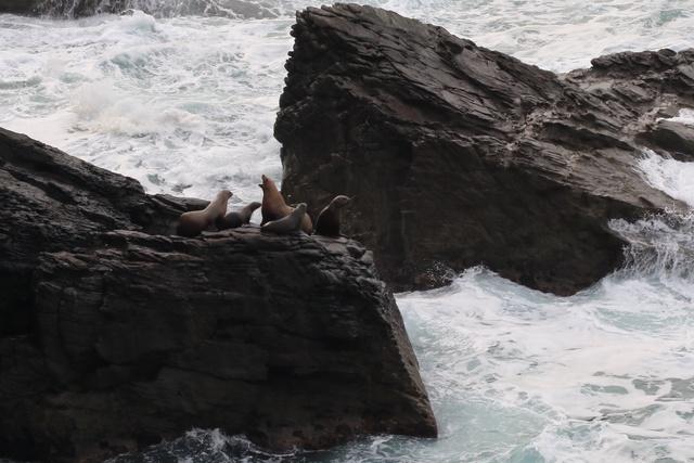 蘭越町の海岸には本当にトドがいるのか?その姿を確認しに断崖絶壁へ