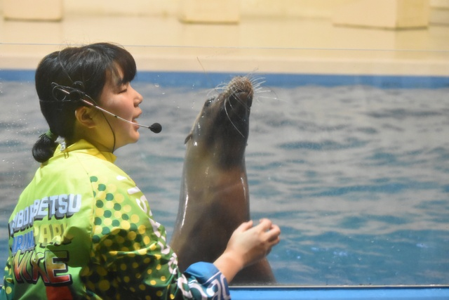 登別マリンパークニクスでアシカ・アザラシの一日飼育員体験!