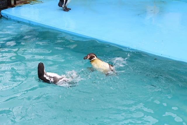 名物はペンギンの行進!隠れ名物は味噌おでん?室蘭水族館の楽しみ方