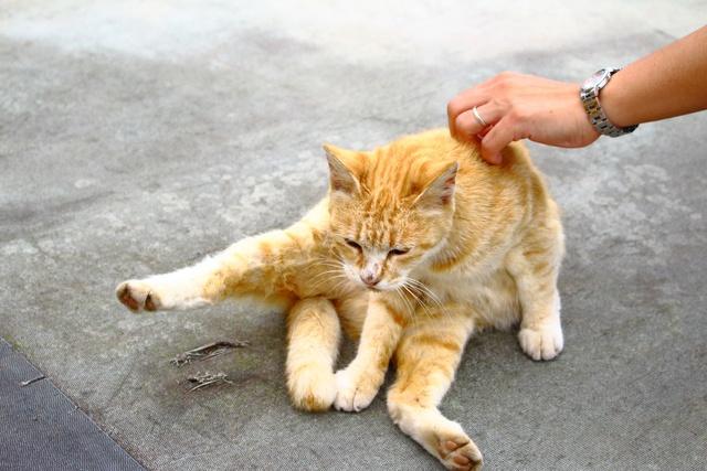 思わずほっこり!動物との触れ合いが楽しい 登別「サンチャイルド」