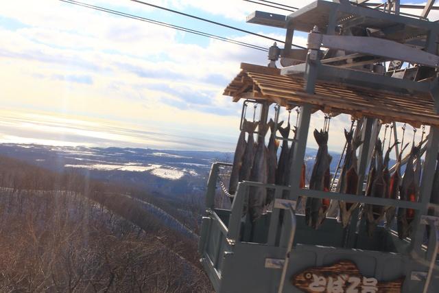 空飛ぶサケをご覧あれ!のぼりべつクマ牧場で驚きの「サケトバ」作り