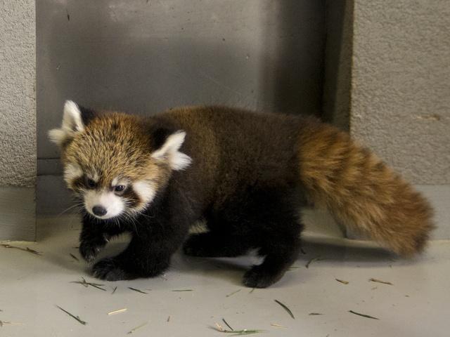 赤ちゃん動物が続々誕生!円山動物園にキュートな赤ちゃんを見に行こう