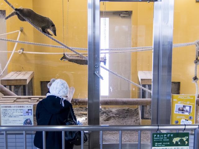 円山動物園・熱帯鳥類館がリニューアル!札幌で熱帯の雰囲気を味わおう