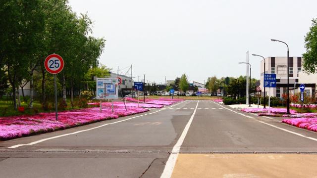 奈井江町に知られざる芝桜スポットがある?毎年「芝桜まつり」も開催