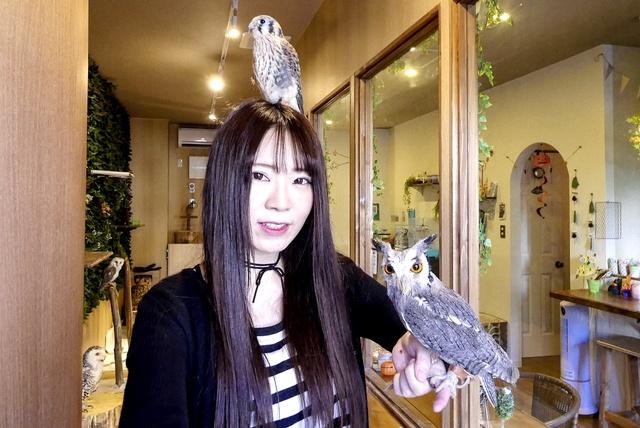 北海道初!フクロウと触れあえる「福ろうカフェ」が札幌市澄川に!