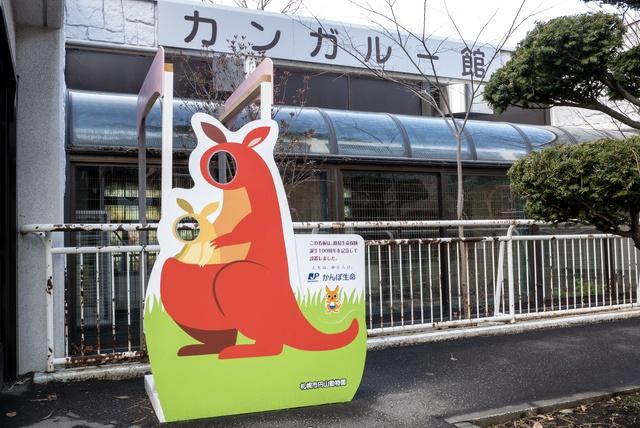 円山動物園のシンリンオオカミは冬場こそ見るべき!そのワケとは?