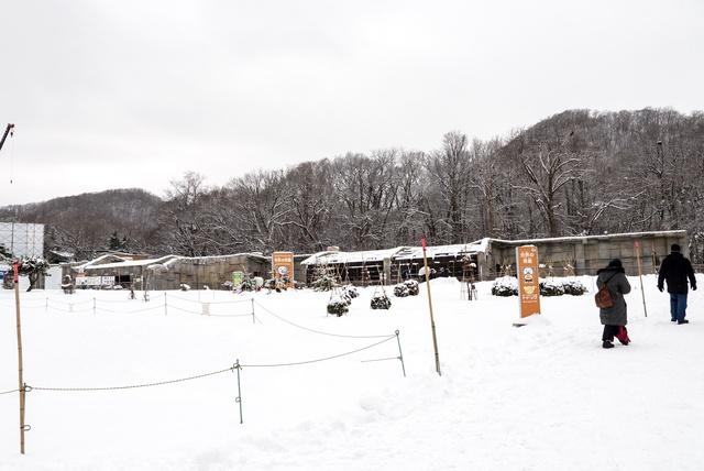 おもちゃで遊ぶその賢さに感心!円山動物園の人気者 ホッキョクグマ
