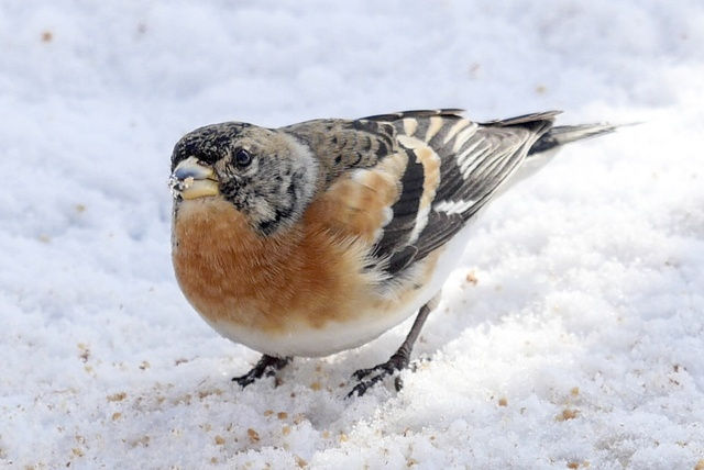 動物写真家がオーナー!野鳥観察できる「THE BIRD WATCHING CAFE」