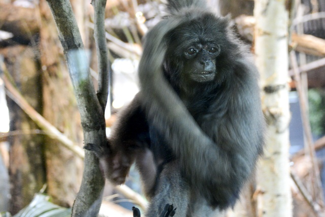 ドンが国内最高齢に!知れば知るほど魅力が見つかる円山動物園のカバ