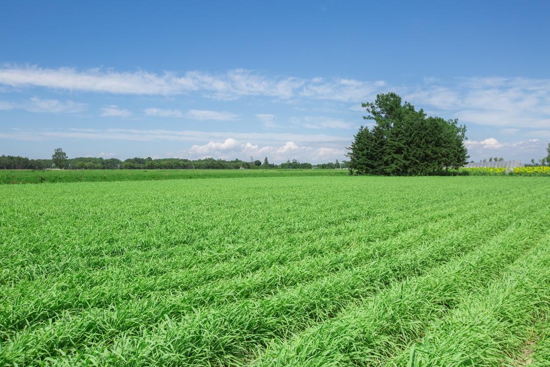 抹茶のように飲みやすい!道産大麦若葉の青汁「若葉のしずく」誕生