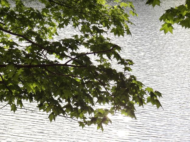 クシロマニア的避暑のススメ(1) 日本最後の秘境?シュンクシタカラ湖