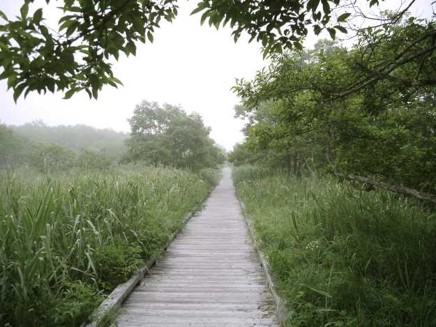 クシロマニア的避暑のススメ(2) 極上のうるおいミスト―夜明けの釧路湿原