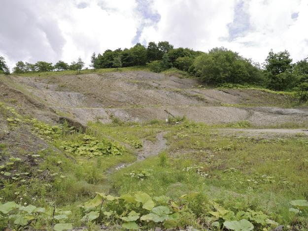 阿寒の山奥で古代ホタテを掘ったって!? 「阿寒シェル鉱業」で貝化石採掘体験
