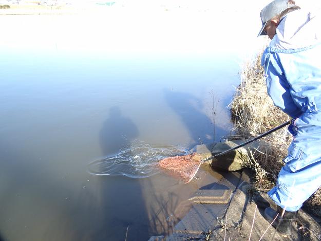12月限定! 意外に難しい? 新釧路川で「黒いシシャモ」捕獲作戦