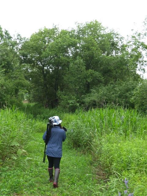 湿原で小さな野鳥の奥深さにハマる!夏の野鳥撮影入門