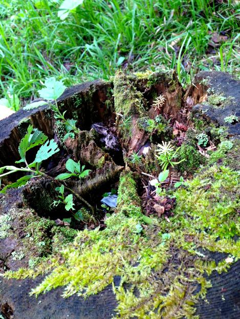 ランプの森つべつ支配人の案内で津別町ノンノの森で森林セラピー体験!