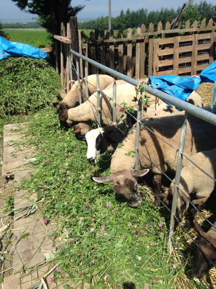 羊のいるパン屋が斜里町に!薪窯で焼きあげる「メーメーベーカリー」