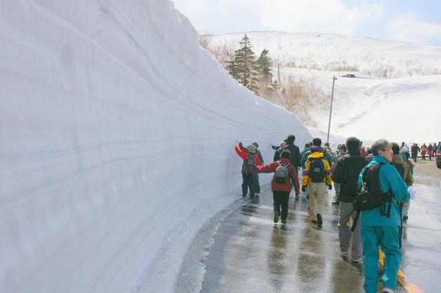 高さ最大4メートル!開通前の知床横断道路を歩く「知床雪壁ウォーク」