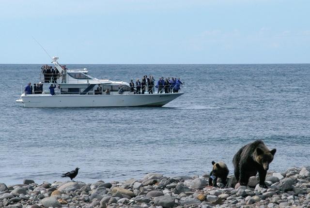 高確率で野生の熊を海から見られる!「知床半島ウトロクルーズ」