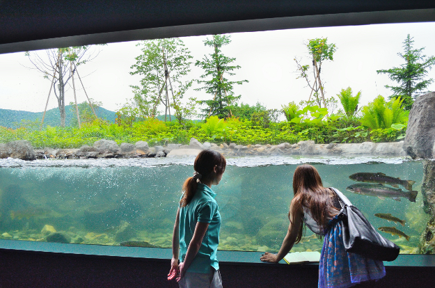 凍る水槽! 滝つぼ水槽! アイデアが光る「おんねゆ温泉 山の水族館」