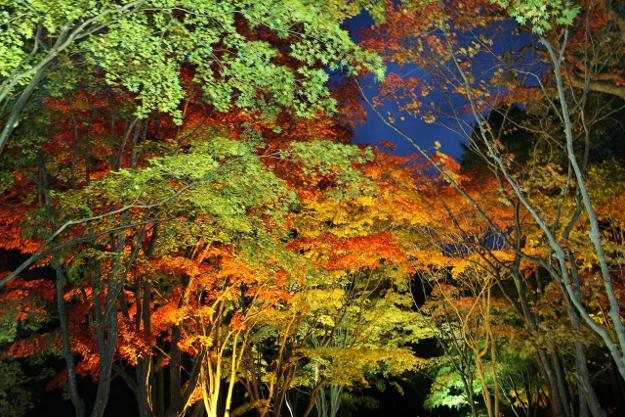 まもなく見頃! 函館・見晴公園『香雪園』で紅葉ライトアップはじまる