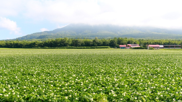 北海道のJAの区域がわからない!北いぶき、北ひびきってどこ?