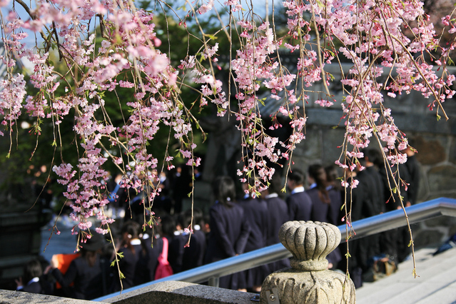 北海道の中学生は修学旅行でどこに行くの? 道内or道外?