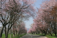 ひだかに春を見つけに行こう!!~日高さくら十景&グルメ旅!!