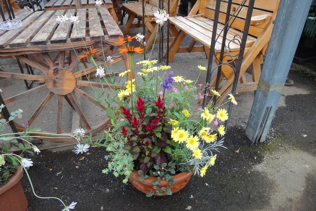その広さと種類の多さに驚き!新琴似の園芸専門店「花のとびつか」