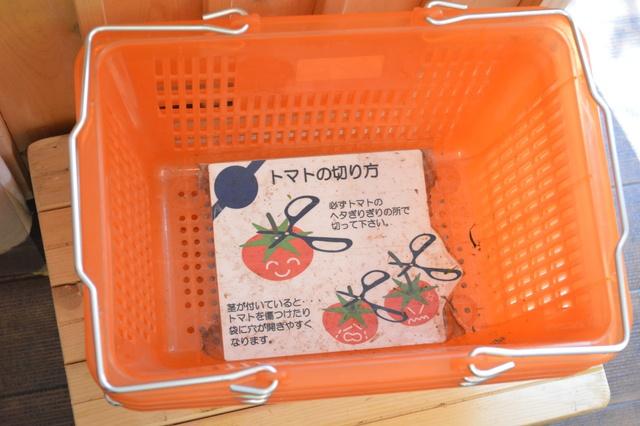 シーズン真っ最中! 旭川「谷口農場」で有機栽培トマトもぎとり体験!