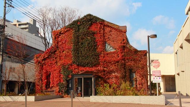 紅葉シーズンの真っ赤な蔦がキレイ!蔦に覆われた北海道の建築物巡り