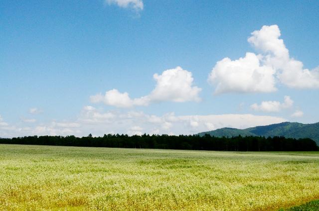 日本一のそば畑を見るなら今!幌加内町のそば畑ビュースポット4選