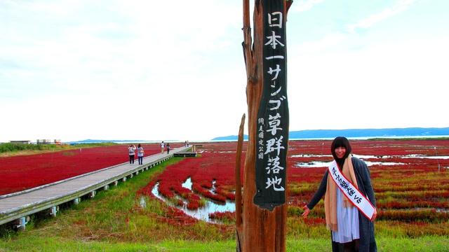一面赤い絨毯に感激!秋に行くべきオホーツク「サンゴ草」群生地5選