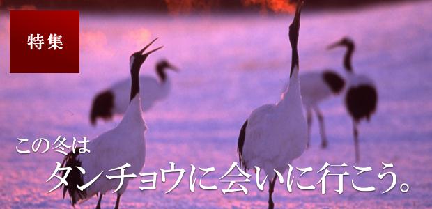 この冬はタンチョウに会いに行こう!釧路・鶴居の観察ポイントまとめ