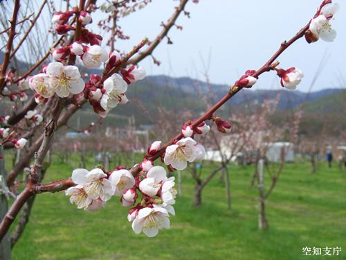 春のお花見・お花スポット大全集