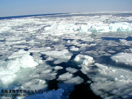 今年こそは流氷を体感しに行こう! 流氷観光の手引き