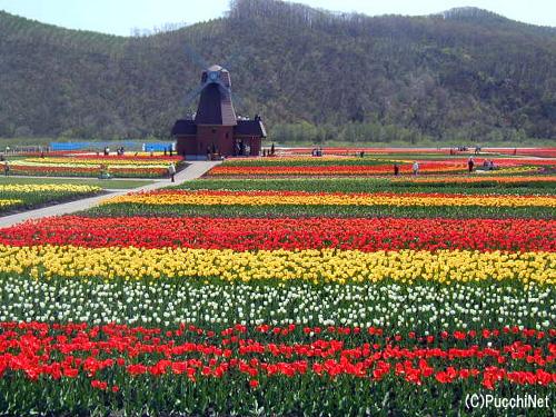 春のオホーツク花名所を訪れよう
