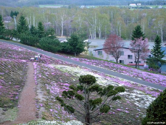 道東の桜スポット